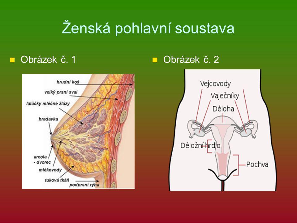 Ženská pohlavní soustava Obrázek č. 1 Obrázek č. 2