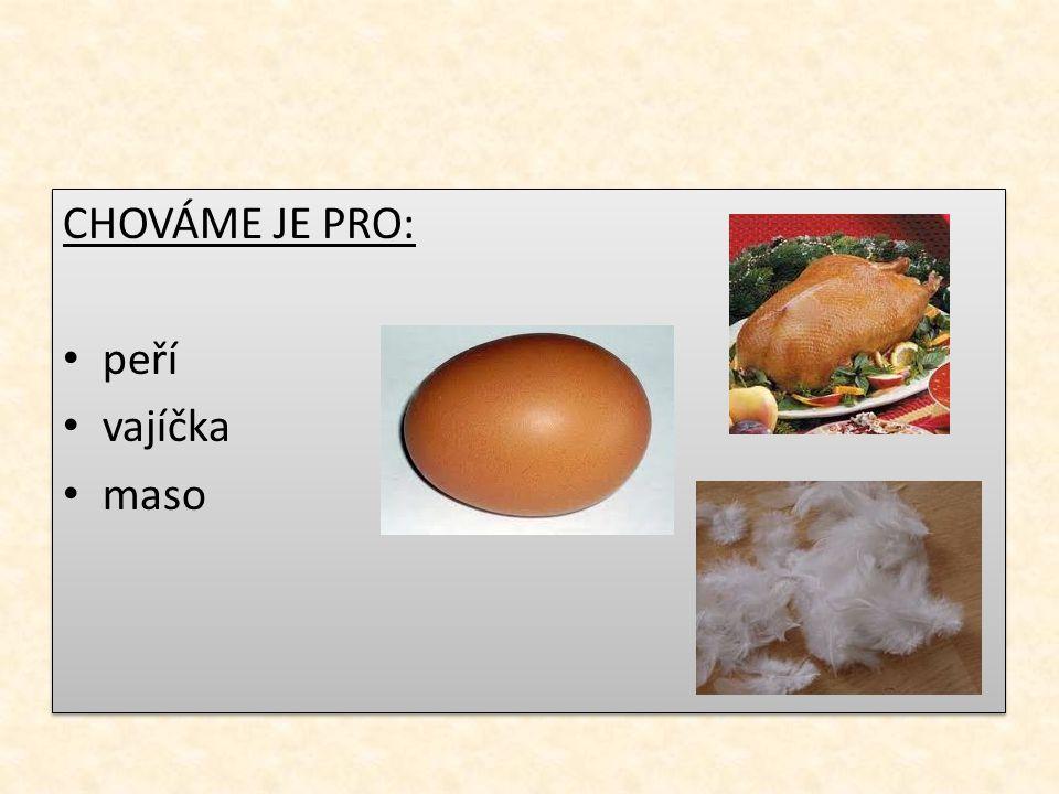 CHOVÁME JE PRO: peří vajíčka maso CHOVÁME JE PRO: peří vajíčka maso