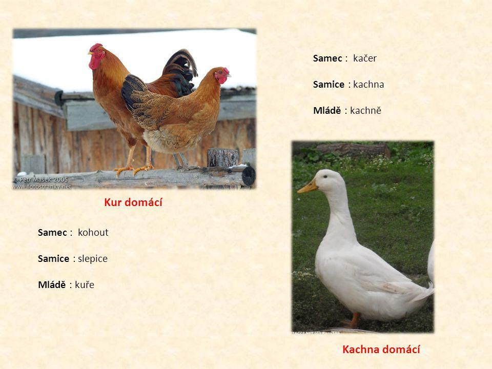 Husa domácí Samec : houser Samice : husa Mládě : house Holub domácí Samec : holub Samice : holubice Mládě : holoubě