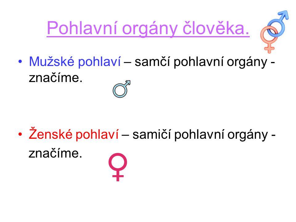 Pohlavní orgány člověka.Mužské pohlaví – samčí pohlavní orgány - značíme.