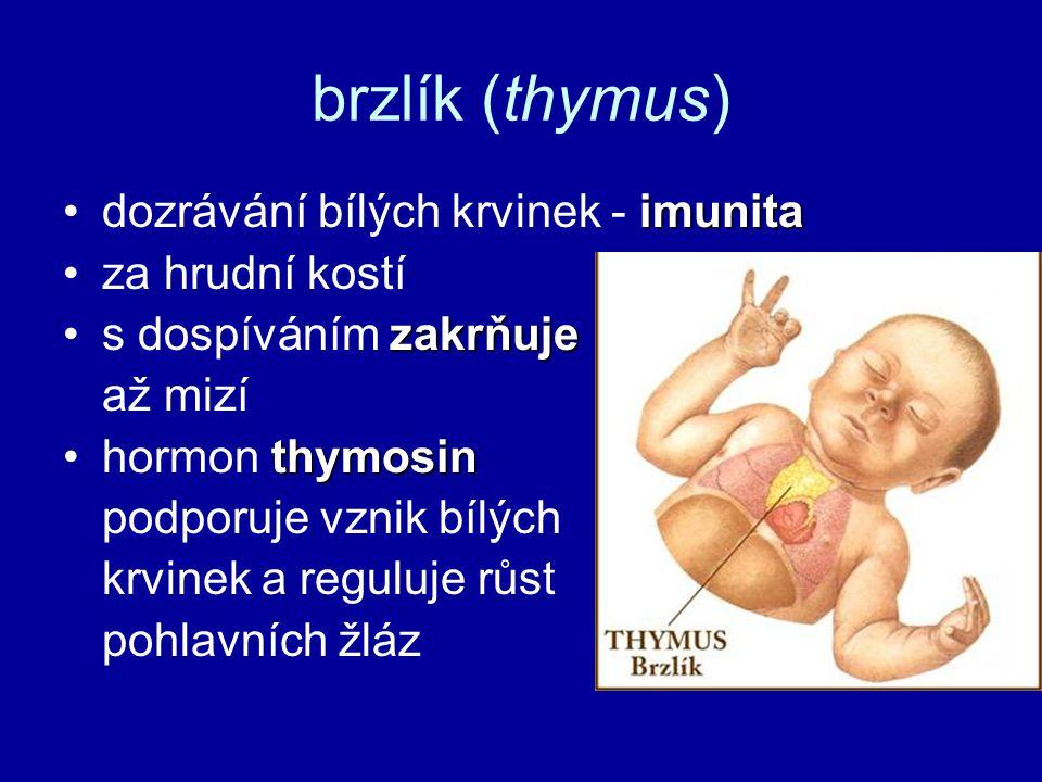brzlík (thymus) imunitadozrávání bílých krvinek - imunita za hrudní kostí zakrňujes dospíváním zakrňuje až mizí thymosinhormon thymosin podporuje vznik bílých krvinek a reguluje růst pohlavních žláz