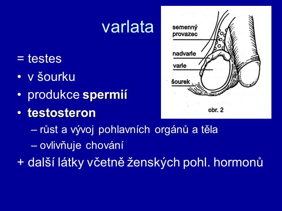 varlata = testes v šourku spermiíprodukce spermií testosterontestosteron –růst a vývoj pohlavních orgánů a těla –ovlivňuje chování + další látky včetně ženských pohl.
