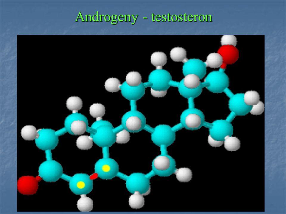 Androgeny - testosteron