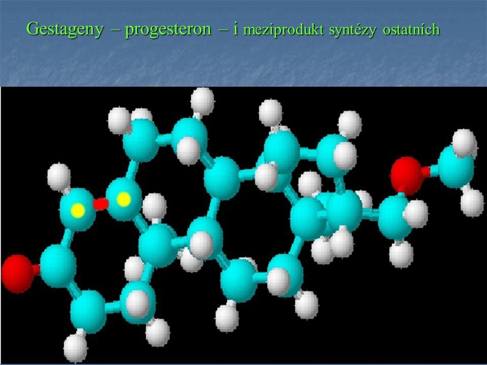 Gestageny – progesteron – i meziprodukt syntézy ostatních