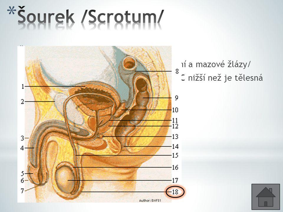 * Uložení a ochrana varlat * Vnější vrstvu tvoří kůže /ochlupení, potní a mazové žlázy/ * Pro spermiogenezi musí být teplota o 4°C nižší než je tělesn