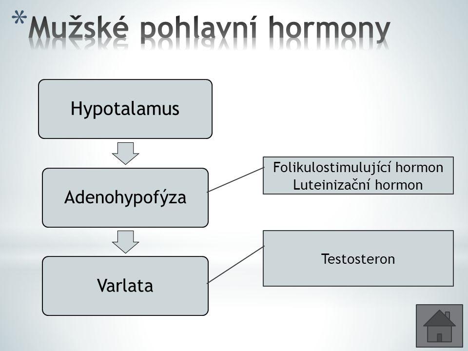 Hypotalamus AdenohypofýzaVarlata Testosteron Folikulostimulující hormon Luteinizační hormon