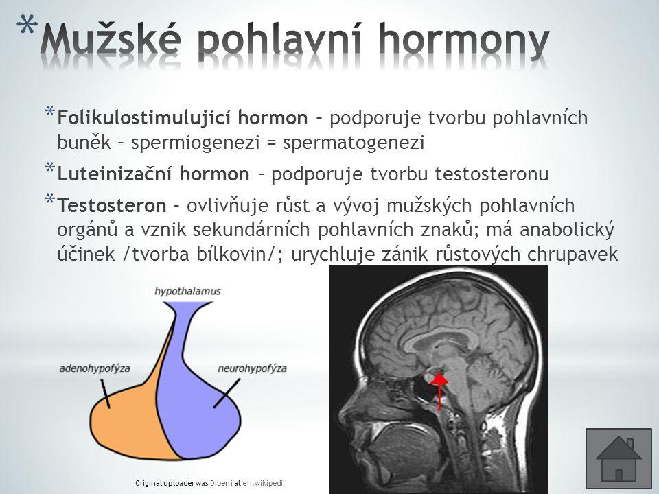 * Folikulostimulující hormon – podporuje tvorbu pohlavních buněk – spermiogenezi = spermatogenezi * Luteinizační hormon – podporuje tvorbu testosteron