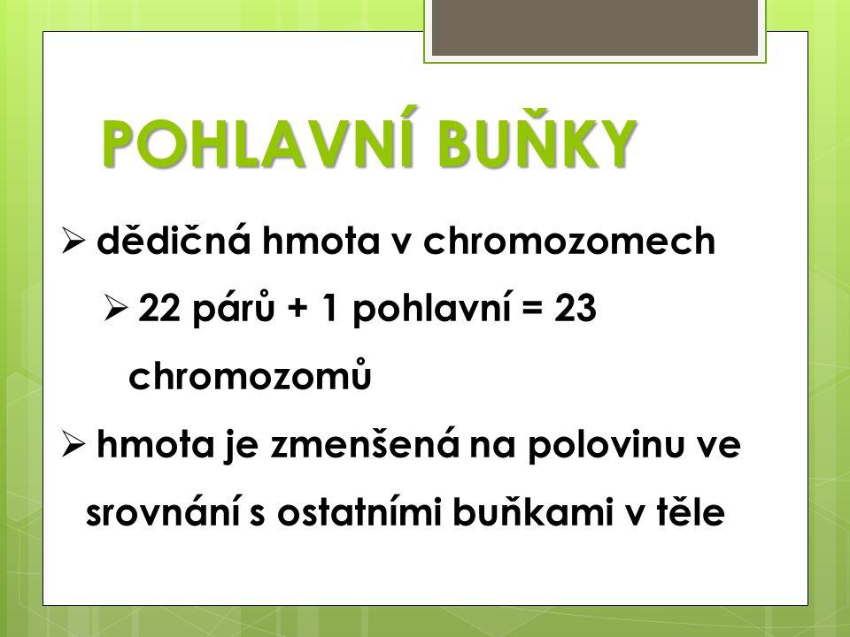 POHLAVNÍ BUŇKY  dědičná hmota v chromozomech  22 párů + 1 pohlavní = 23 chromozomů  hmota je zmenšená na polovinu ve srovnání s ostatními buňkami v těle