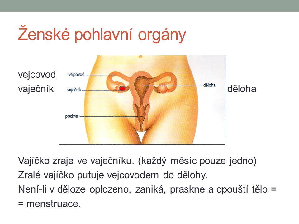 Ženské pohlavní orgány vejcovod vaječníkděloha Vajíčko zraje ve vaječníku. (každý měsíc pouze jedno) Zralé vajíčko putuje vejcovodem do dělohy. Není-l