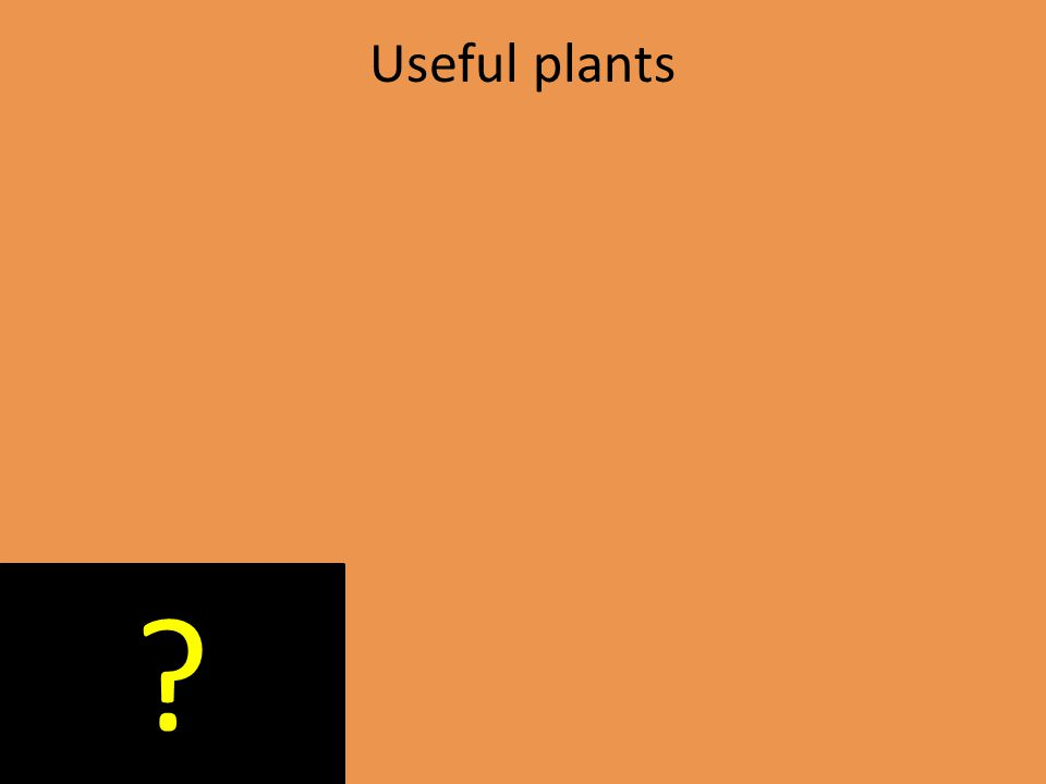 Useful plants ?