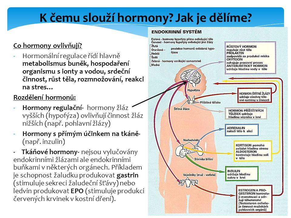 Co hormony ovlivňují? -Hormonální regulace řídí hlavně metabolismus buněk, hospodaření organismu s ionty a vodou, srdeční činnost, růst těla, rozmnožo