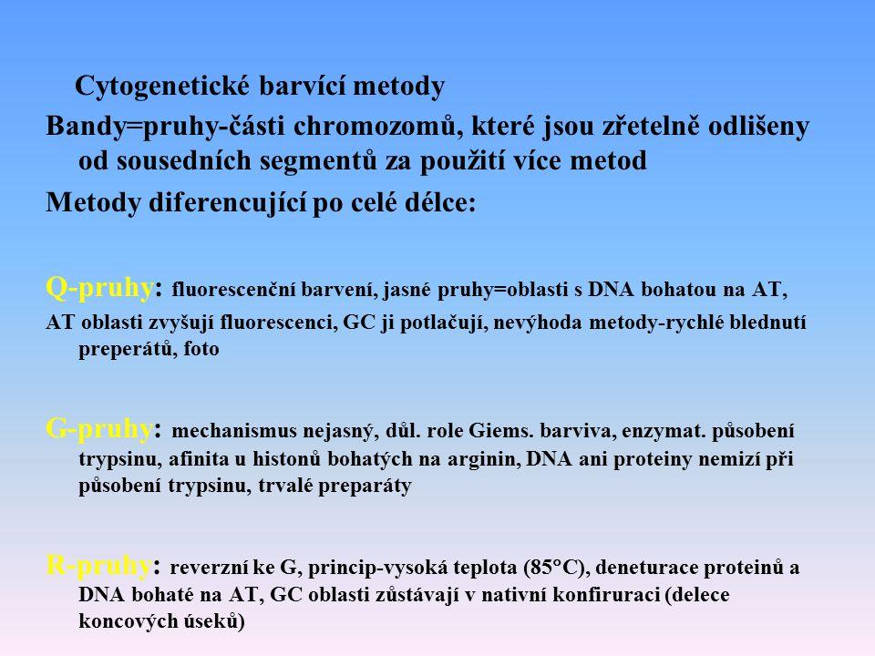Cytogenetické barvící metody Bandy=pruhy-části chromozomů, které jsou zřetelně odlišeny od sousedních segmentů za použití více metod Metody diferencuj