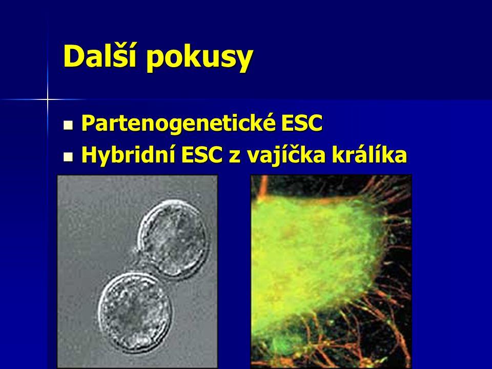 Další pokusy Partenogenetické ESC Partenogenetické ESC Hybridní ESC z vajíčka králíka Hybridní ESC z vajíčka králíka