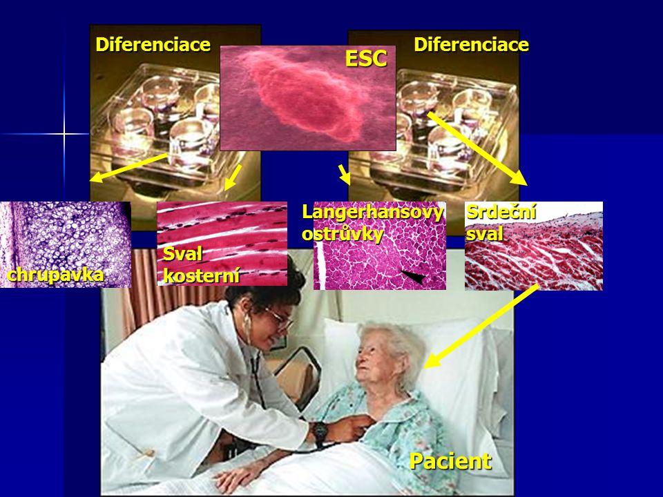chrupavka Sval kosterní Langerhansovyostrůvky Srdeční sval ESC DiferenciaceDiferenciace Pacient