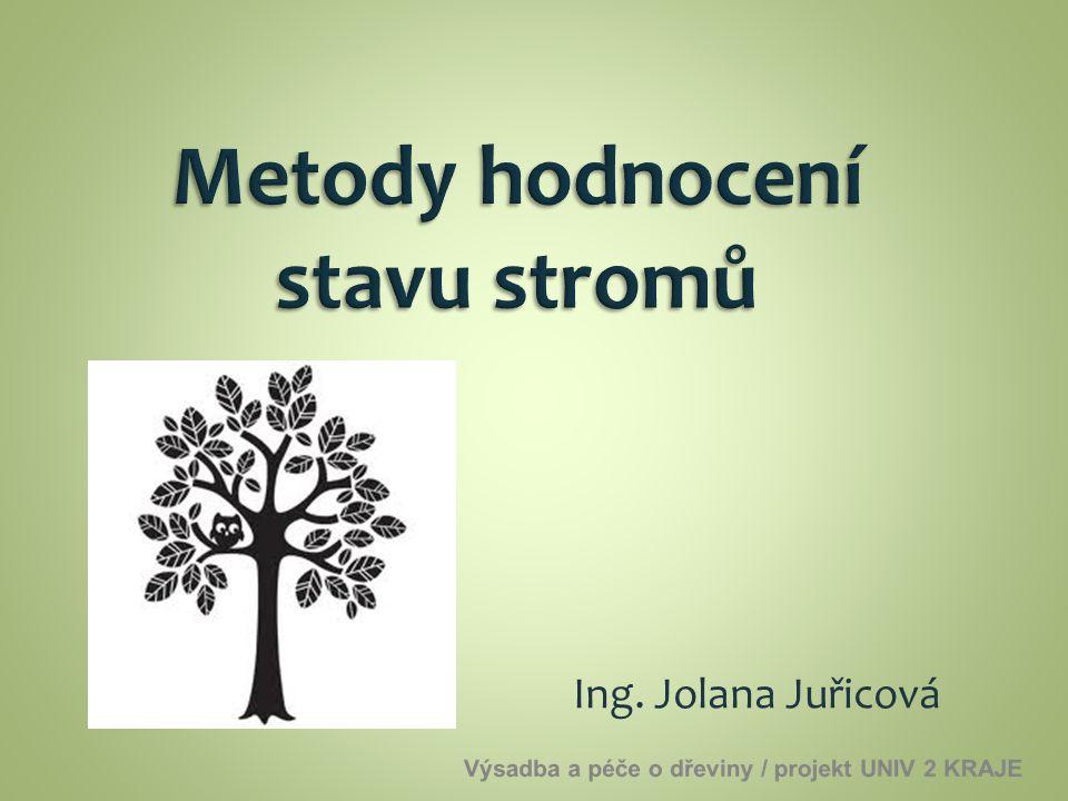 Ing. Jolana Juřicová
