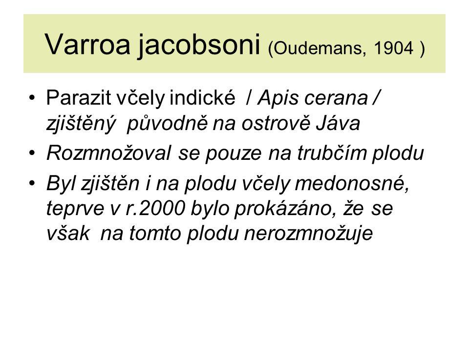 Varroa jacobsoni (Oudemans, 1904 ) Parazit včely indické / Apis cerana / zjištěný původně na ostrově Jáva Rozmnožoval se pouze na trubčím plodu Byl zjištěn i na plodu včely medonosné, teprve v r.2000 bylo prokázáno, že se však na tomto plodu nerozmnožuje
