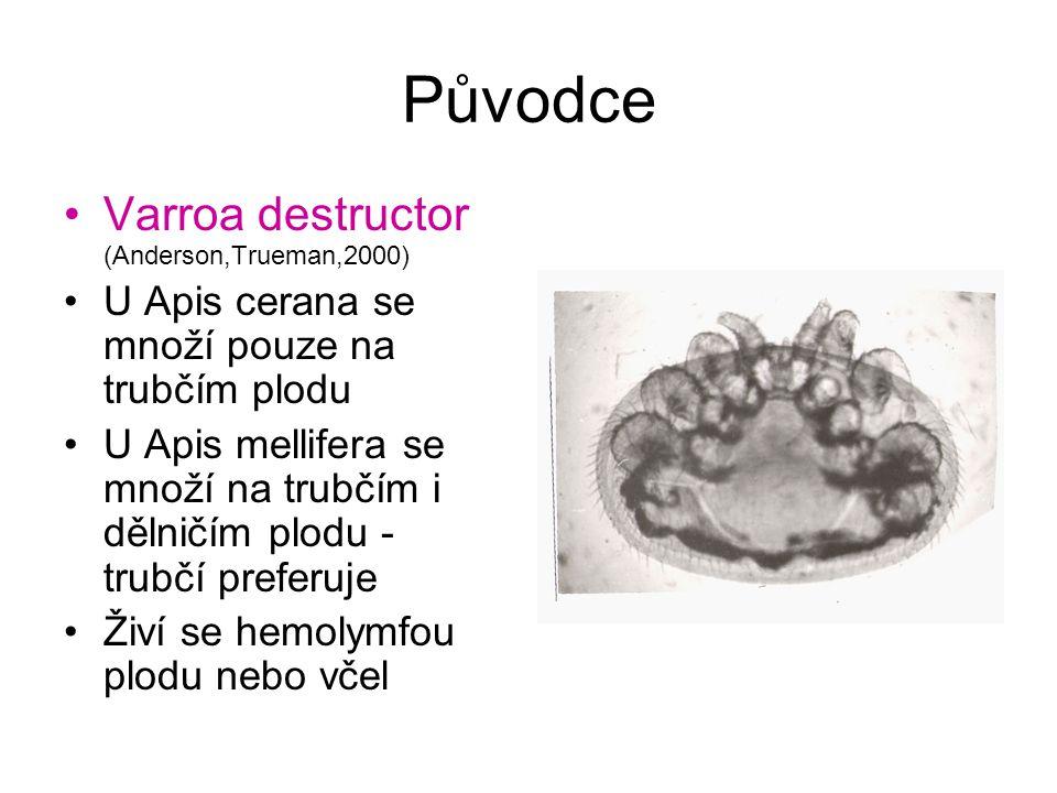 Původce Varroa destructor (Anderson,Trueman,2000) U Apis cerana se množí pouze na trubčím plodu U Apis mellifera se množí na trubčím i dělničím plodu - trubčí preferuje Živí se hemolymfou plodu nebo včel