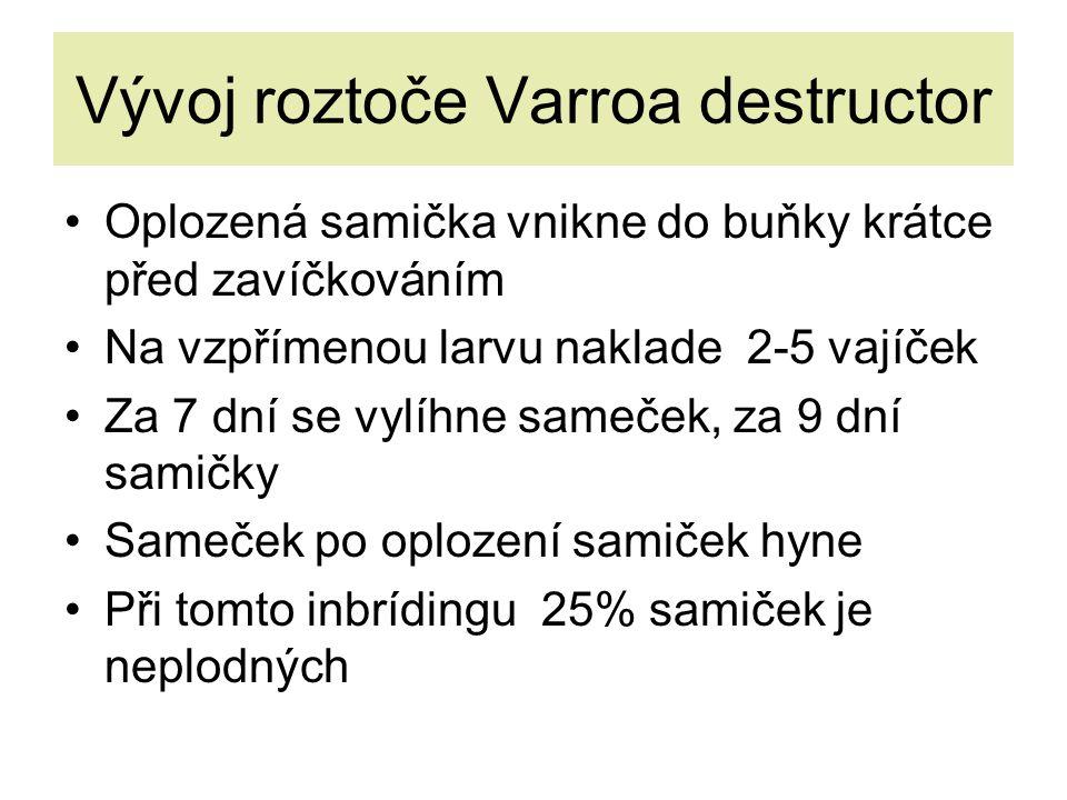 Vývoj roztoče Varroa destructor Oplozená samička vnikne do buňky krátce před zavíčkováním Na vzpřímenou larvu naklade 2-5 vajíček Za 7 dní se vylíhne sameček, za 9 dní samičky Sameček po oplození samiček hyne Při tomto inbrídingu 25% samiček je neplodných