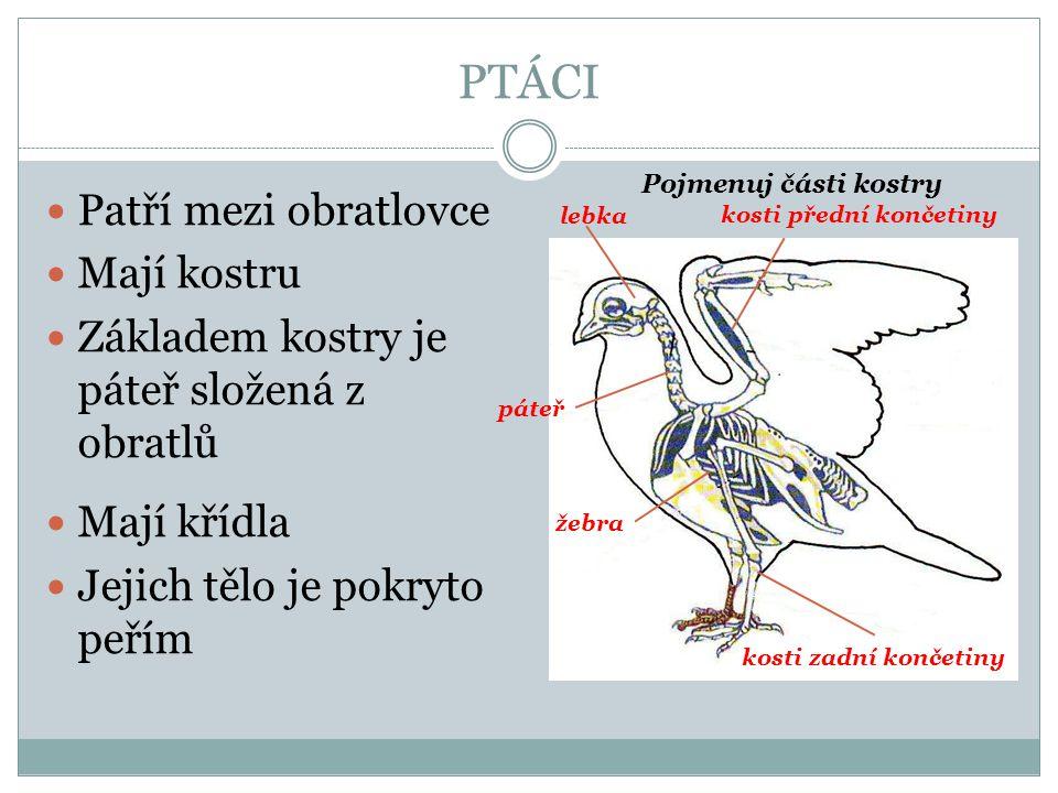 Patří mezi obratlovce Mají kostru Základem kostry je páteř složená z obratlů Mají křídla Jejich tělo je pokryto peřím lebka páteř žebra kosti přední končetiny kosti zadní končetiny Pojmenuj části kostry