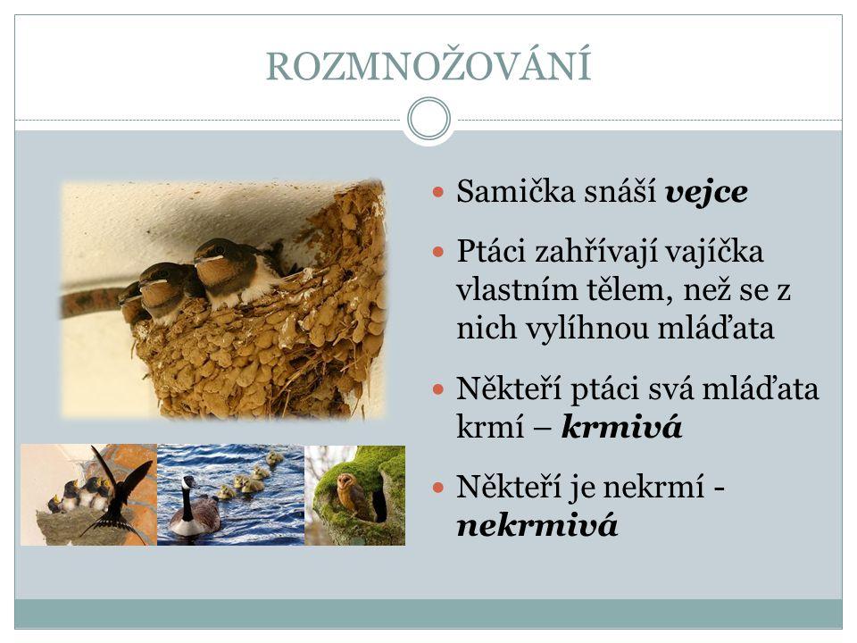 Zdroj použitých obrázků: Prvouka pro 3.ročník.