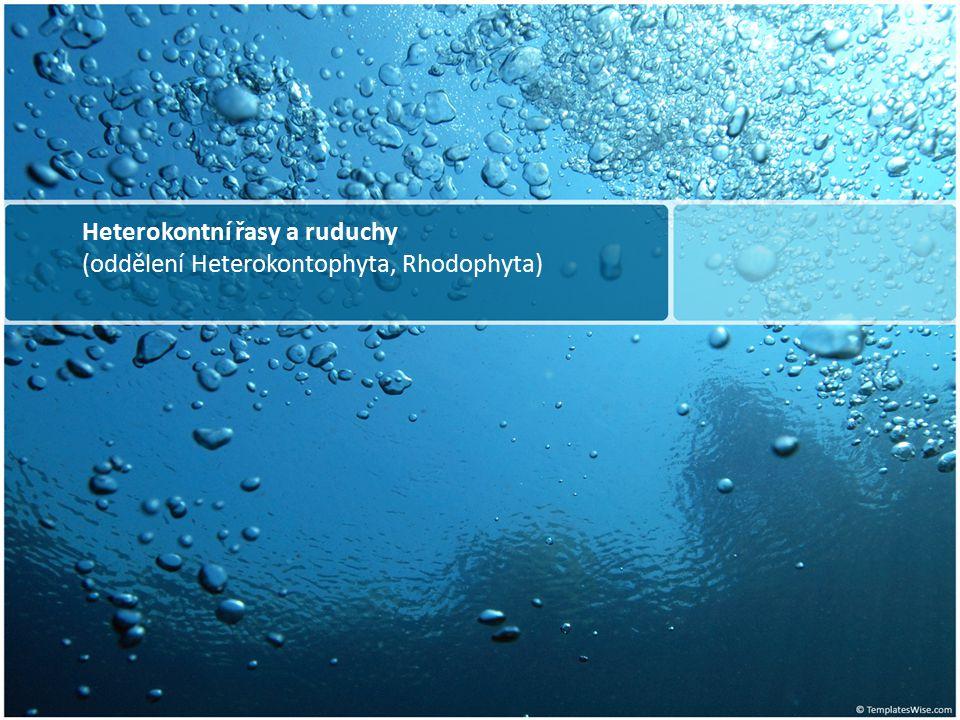 Odd.: Rhodophyta Řád: Batrachospermales Batrachospermum moniliforme Trvalý preparát Zvětš. obj. 10x