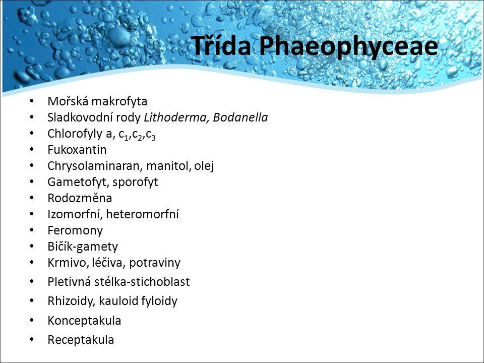 Třída Phaeophyceae Mořská makrofyta Sladkovodní rody Lithoderma, Bodanella Chlorofyly a, c 1,c 2,c 3 Fukoxantin Chrysolaminaran, manitol, olej Gametof