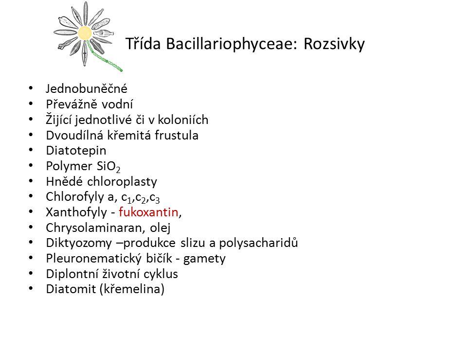 Třída Bacillariophyceae: Rozsivky Jednobuněčné Převážně vodní Žijící jednotlivé či v koloniích Dvoudílná křemitá frustula Diatotepin Polymer SiO 2 Hně