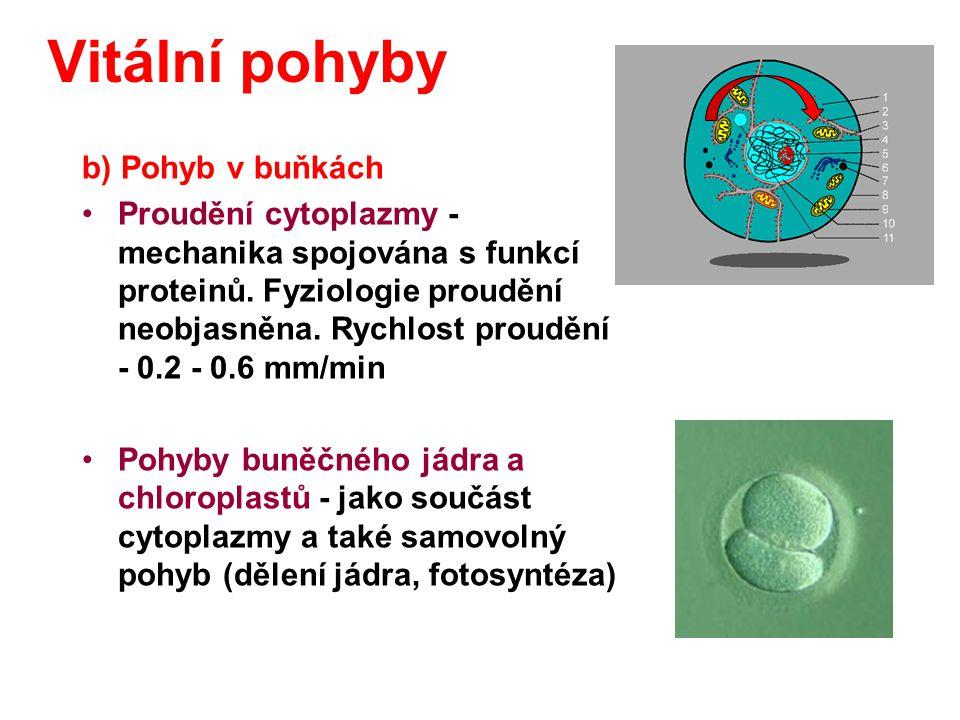 b) Pohyb v buňkách Proudění cytoplazmy - mechanika spojována s funkcí proteinů. Fyziologie proudění neobjasněna. Rychlost proudění - 0.2 - 0.6 mm/min