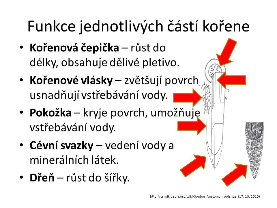 Funkce jednotlivých částí kořene http://cs.wikipedia.org/wiki/Soubor:Anatomy_roots.jpg (17.