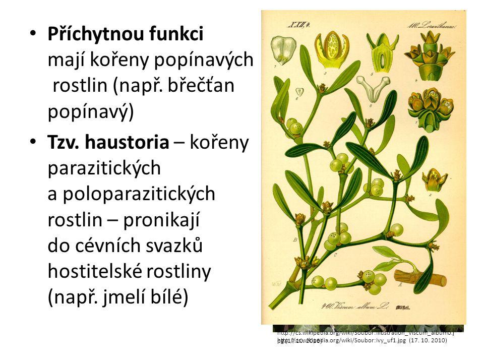 Příchytnou funkci mají kořeny popínavých rostlin (např.
