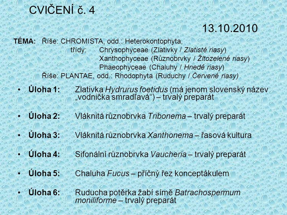 "CVIČENÍ č. 4 13.10.2010 Úloha 1: Zlativka Hydrurus foetidus (má jenom slovenský název ""vodnička smradľavá"") – trvalý preparát Úloha 2: Vláknitá různob"