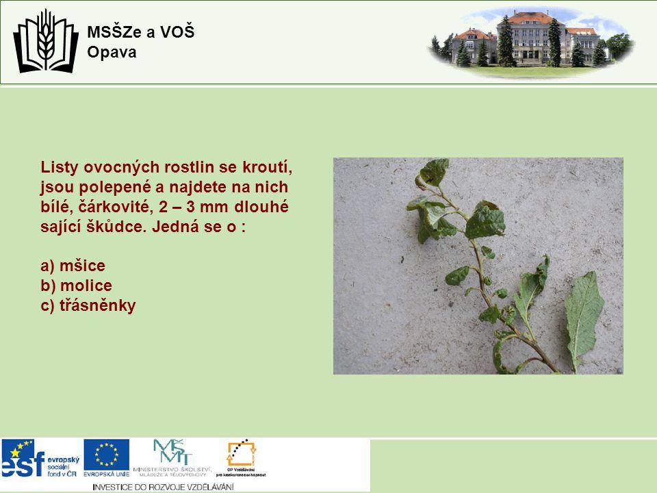 MSŠZe a VOŠ Opava Listy ovocných rostlin se kroutí, jsou polepené a najdete na nich bílé, čárkovité, 2 – 3 mm dlouhé sající škůdce. Jedná se o : a) mš