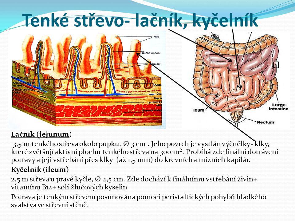 Tenké střevo- lačník, kyčelník Lačník (jejunum) 3,5 m tenkého střeva okolo pupku, Ø 3 cm. Jeho povrch je vystlán výčnělky- klky, které zvětšují aktivn