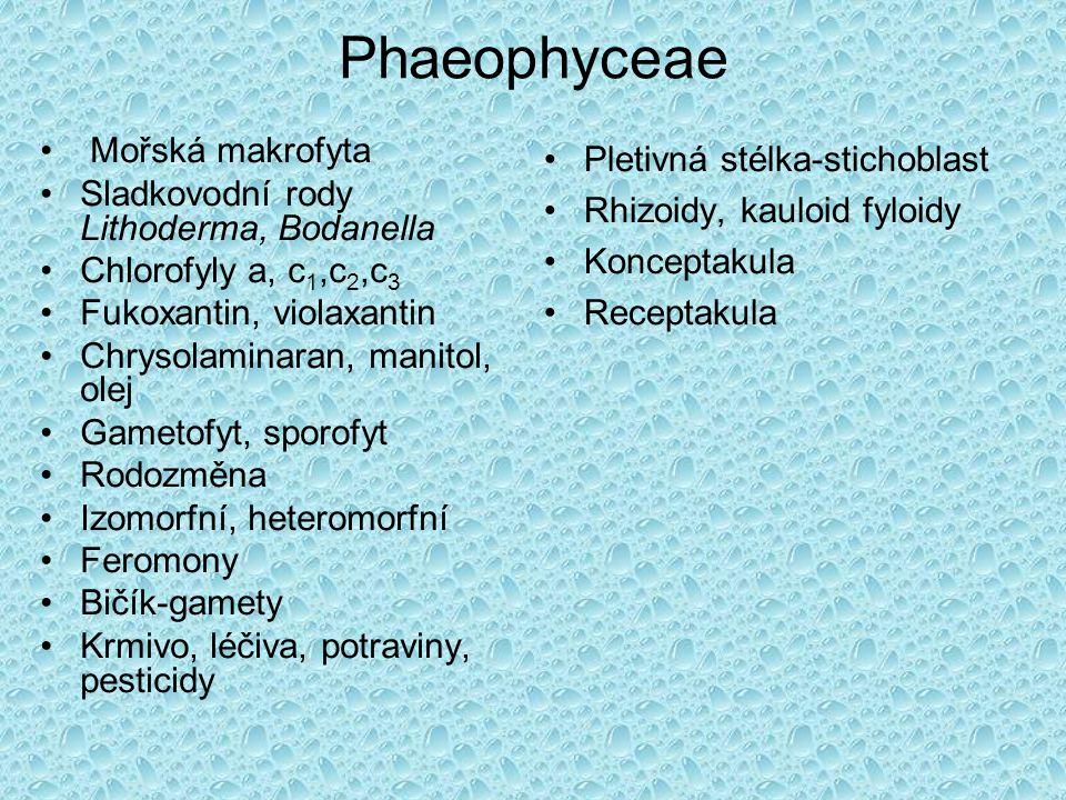 Phaeophyceae Mořská makrofyta Sladkovodní rody Lithoderma, Bodanella Chlorofyly a, c 1,c 2,c 3 Fukoxantin, violaxantin Chrysolaminaran, manitol, olej