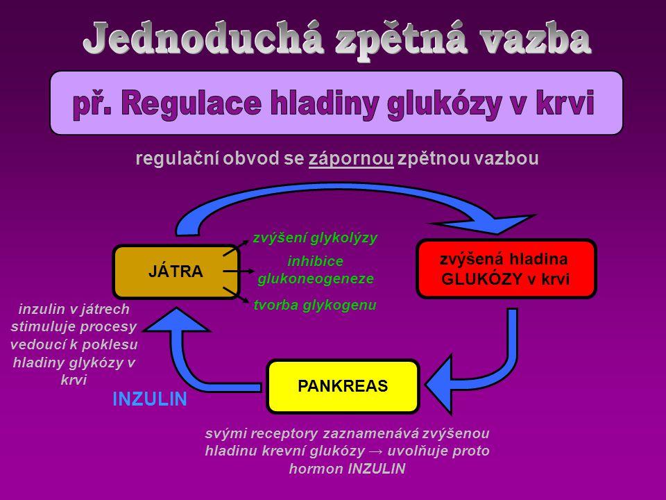 inzulin v játrech stimuluje procesy vedoucí k poklesu hladiny glykózy v krvi Optimální hladina GLUKÓZY v plazmě PANKREAS JÁTRA zvýšená hladina GLUKÓZY v krvi svými receptory zaznamenává zvýšenou hladinu krevní glukózy → uvolňuje proto hormon INZULIN INZULIN regulační obvod se zápornou zpětnou vazbou zvýšení glykolýzy inhibice glukoneogeneze tvorba glykogenu