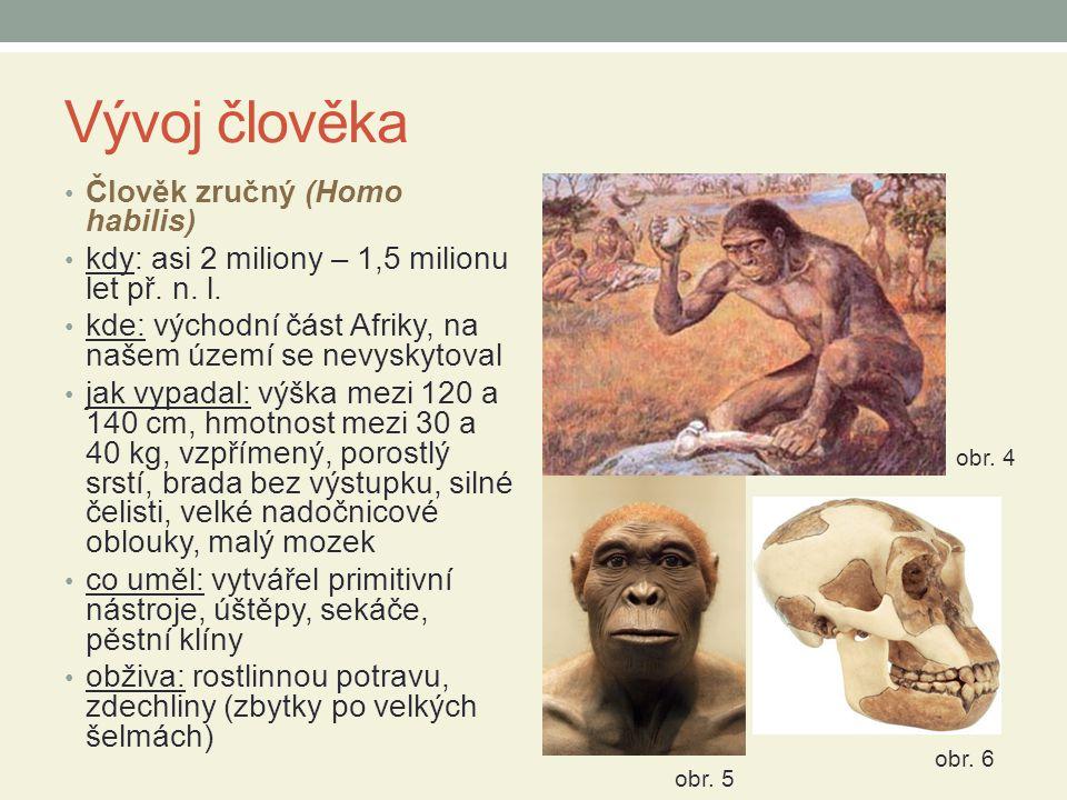 Vývoj člověka Člověk zručný (Homo habilis) kdy: asi 2 miliony – 1,5 milionu let př.