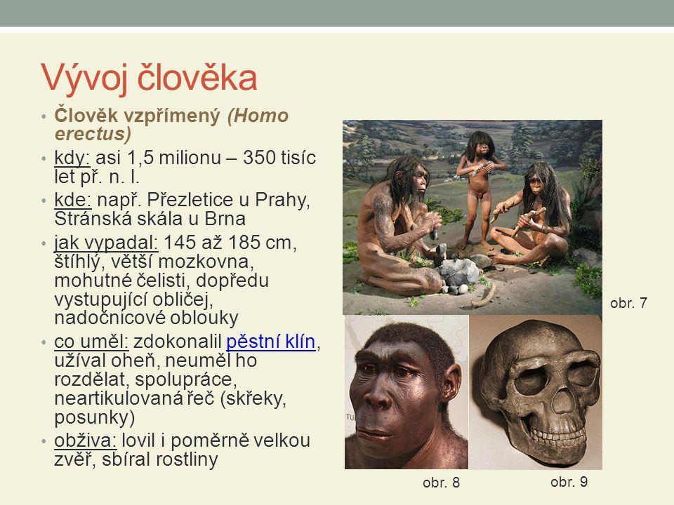 Vývoj člověka Člověk vzpřímený (Homo erectus) kdy: asi 1,5 milionu – 350 tisíc let př.