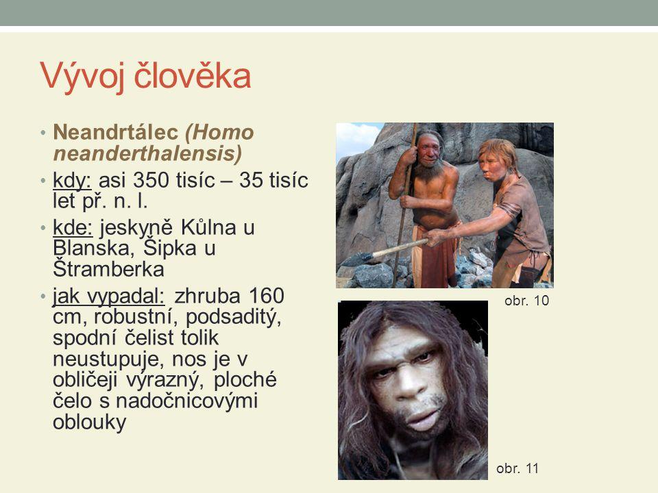 Vývoj člověka Neandrtálec (Homo neanderthalensis) kdy: asi 350 tisíc – 35 tisíc let př.