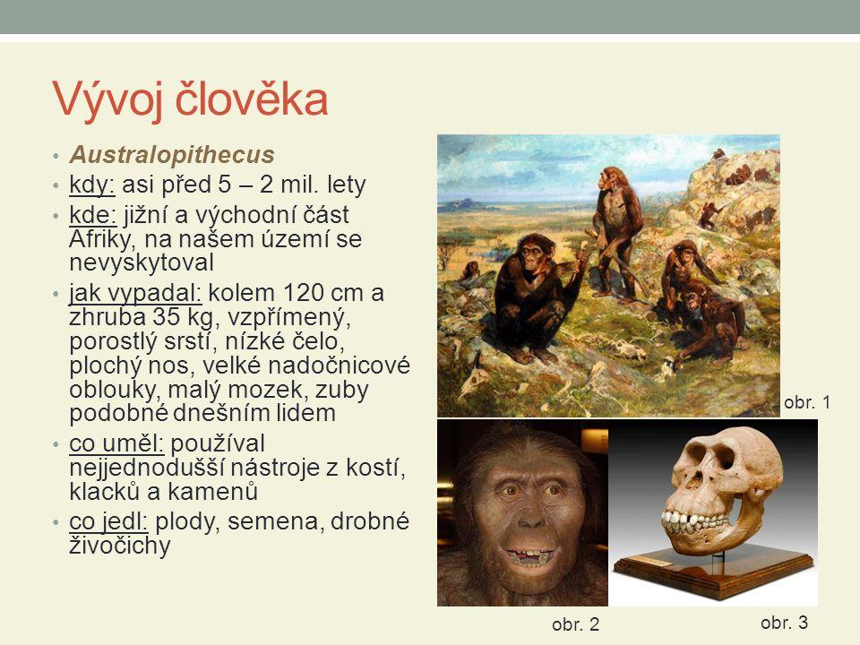 Vývoj člověka Australopithecus kdy: asi před 5 – 2 mil.