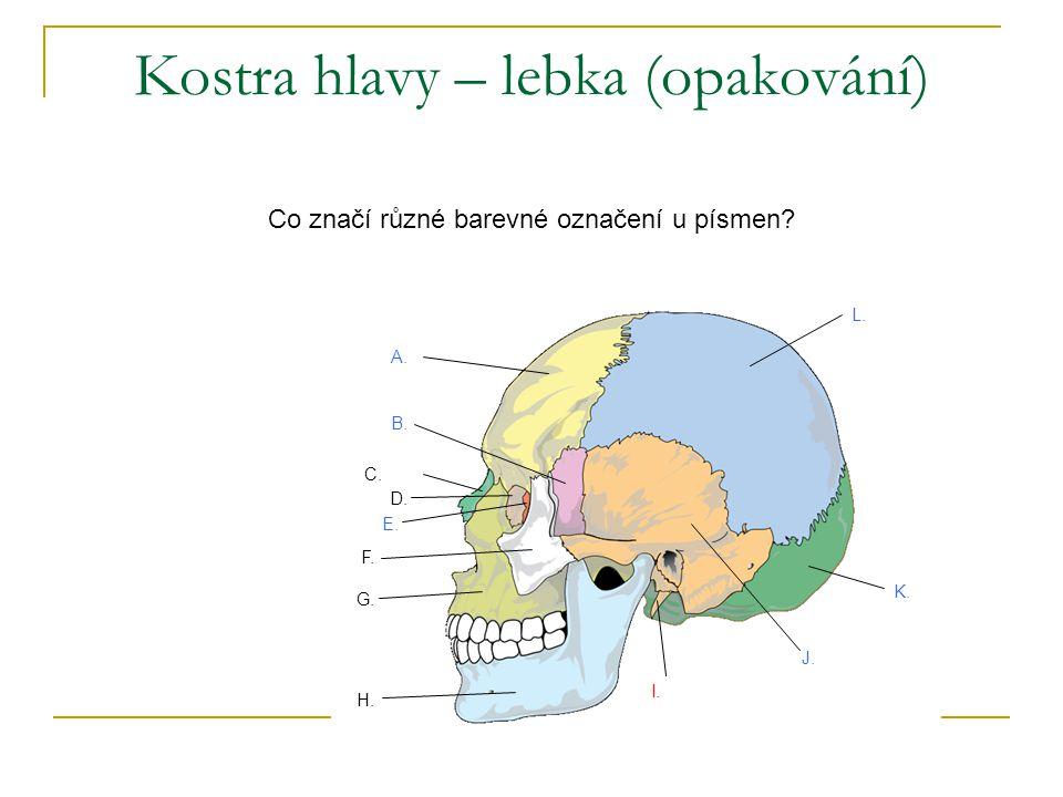 temenní kost čelní kost klínová kost čichová kost slzní kost nosní kost lícní kost spánková kost horní čelist týlní kost jazylka dolní čelist Kostra hlavy – lebka (opakování) mozková část obličejová část jazylka