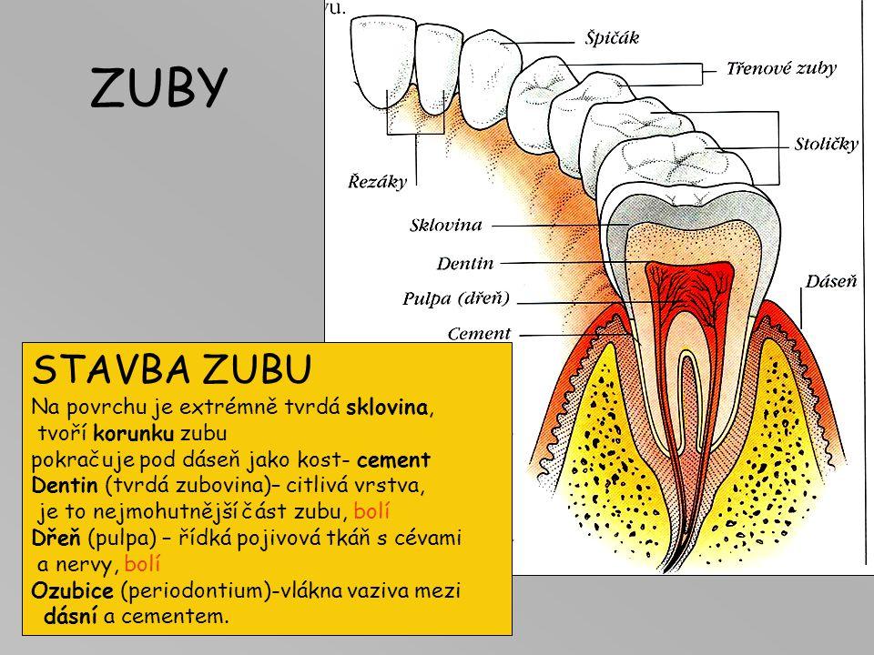 ZUBY STAVBA ZUBU Na povrchu je extrémně tvrdá sklovina, tvoří korunku zubu pokračuje pod dáseň jako kost- cement Dentin (tvrdá zubovina)– citlivá vrst