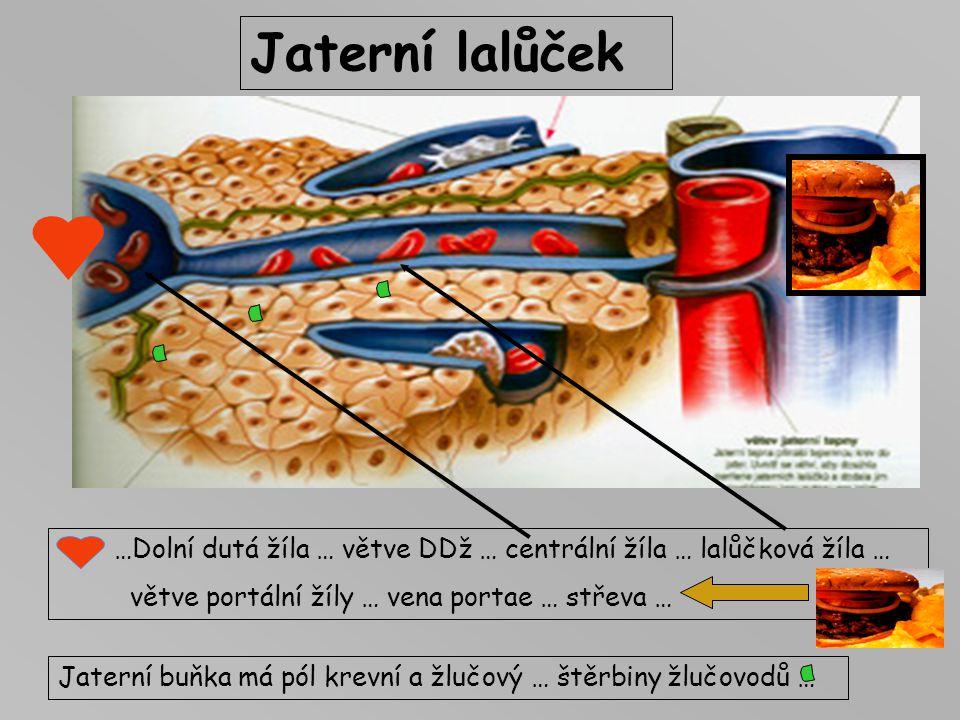 Jaterní lalůček …Dolní dutá žíla … větve DDž … centrální žíla … lalůčková žíla … větve portální žíly … vena portae … střeva … Jaterní buňka má pól kre