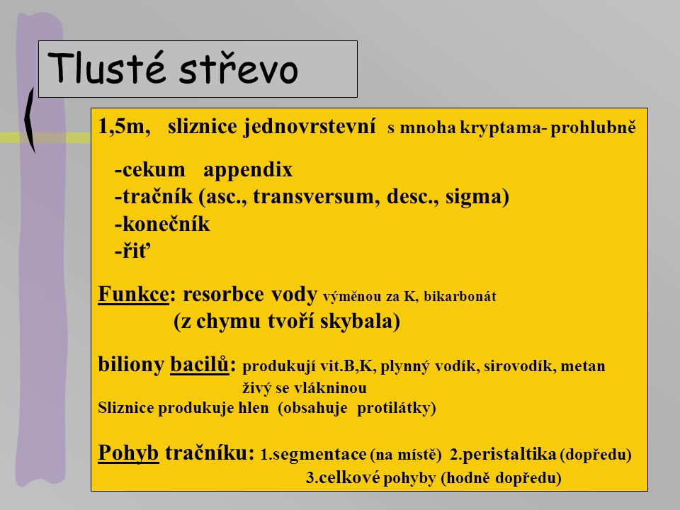 Tlusté střevo 1,5m, sliznice jednovrstevní s mnoha kryptama- prohlubně -cekum appendix -tračník (asc., transversum, desc., sigma) -konečník -řiť Funkc