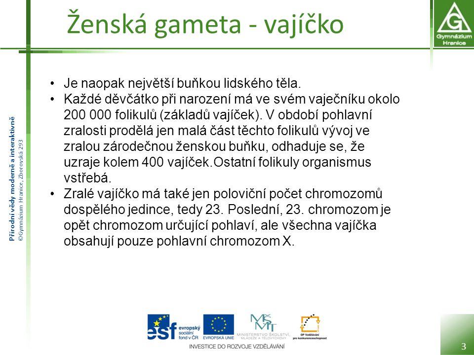 Přírodní vědy moderně a interaktivně ©Gymnázium Hranice, Zborovská 293 Ženská gameta - vajíčko 3 Je naopak největší buňkou lidského těla. Každé děvčát