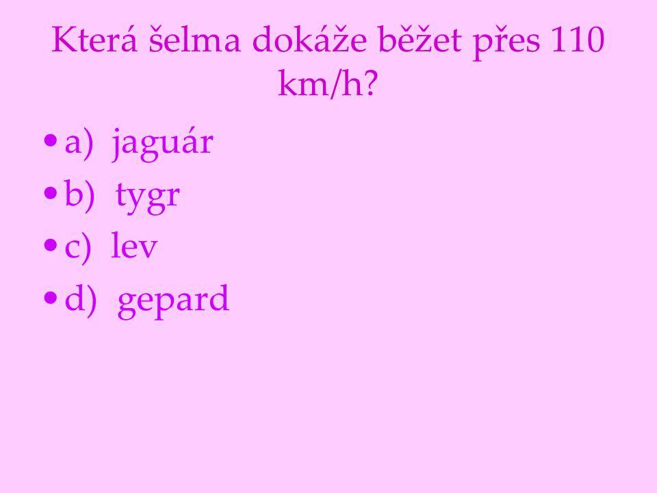 Která šelma dokáže běžet přes 110 km/h? a) jaguár b) tygr c) lev d) gepard