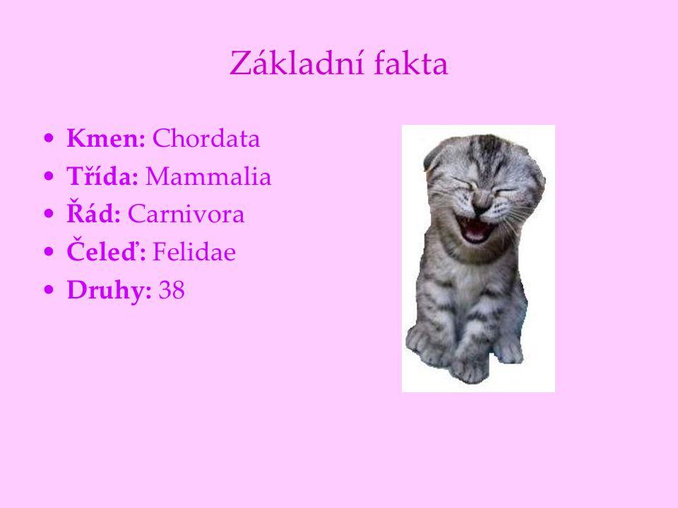 Základní fakta Kmen: Chordata Třída: Mammalia Řád: Carnivora Čeleď: Felidae Druhy: 38