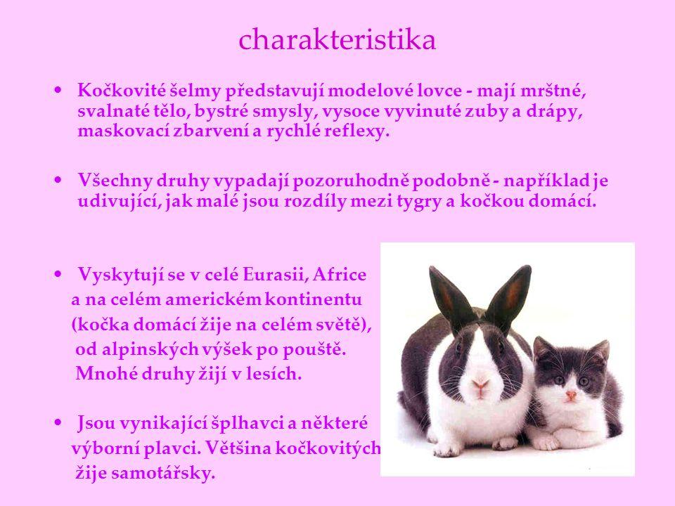 charakteristika Kočkovité šelmy představují modelové lovce - mají mrštné, svalnaté tělo, bystré smysly, vysoce vyvinuté zuby a drápy, maskovací zbarve