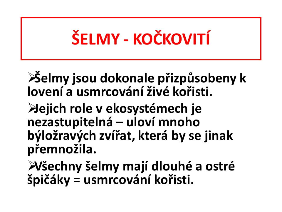 ŠELMY - KOČKOVITÍ