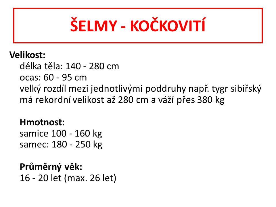 ŠELMY - KOČKOVITÍ Velikost: délka těla: 140 - 280 cm ocas: 60 - 95 cm velký rozdíl mezi jednotlivými poddruhy např.