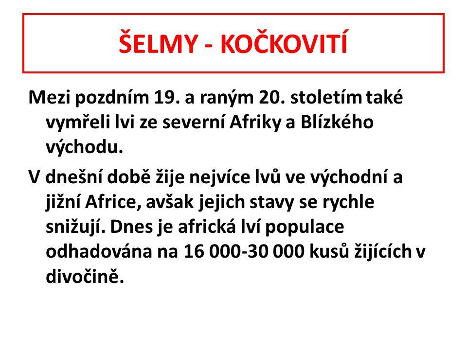 ŠELMY - KOČKOVITÍ Mezi pozdním 19.a raným 20.